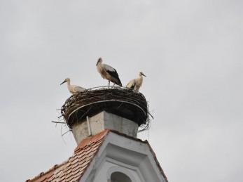 Storchennest auf dem Kirchturm von Bad Buchau